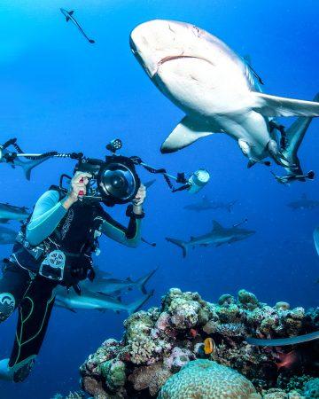 与鲨共舞 Shark Diving
